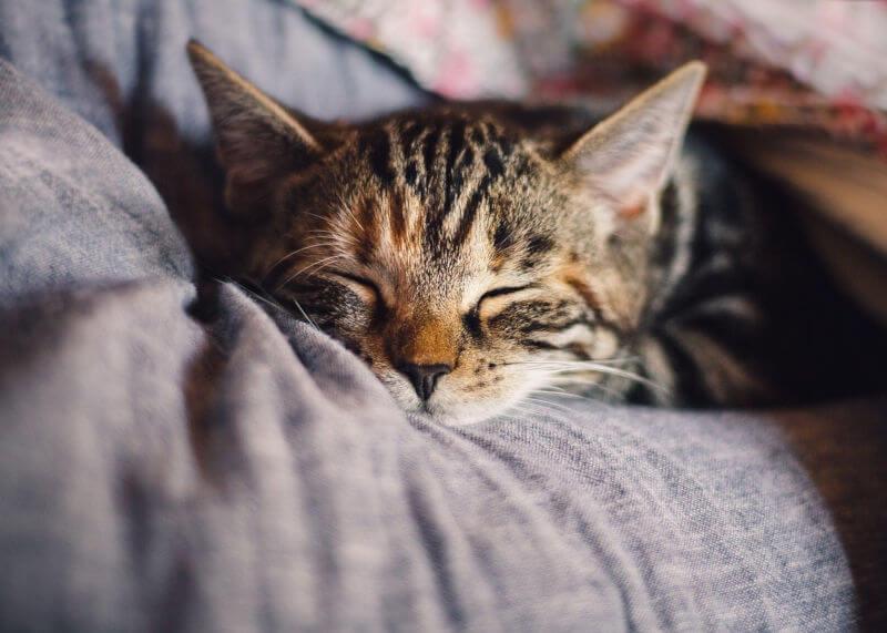 Diese schlafende Katze kennt die Schlafhygiene